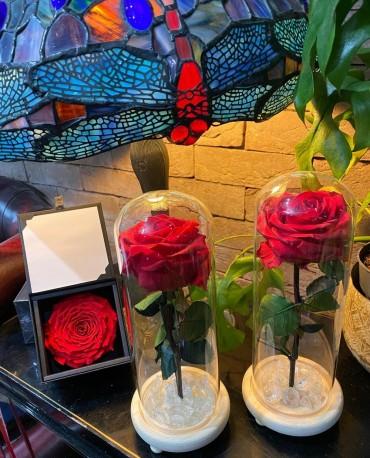 Preserved Eternal Roses