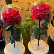 Preserved Eternal Roses
